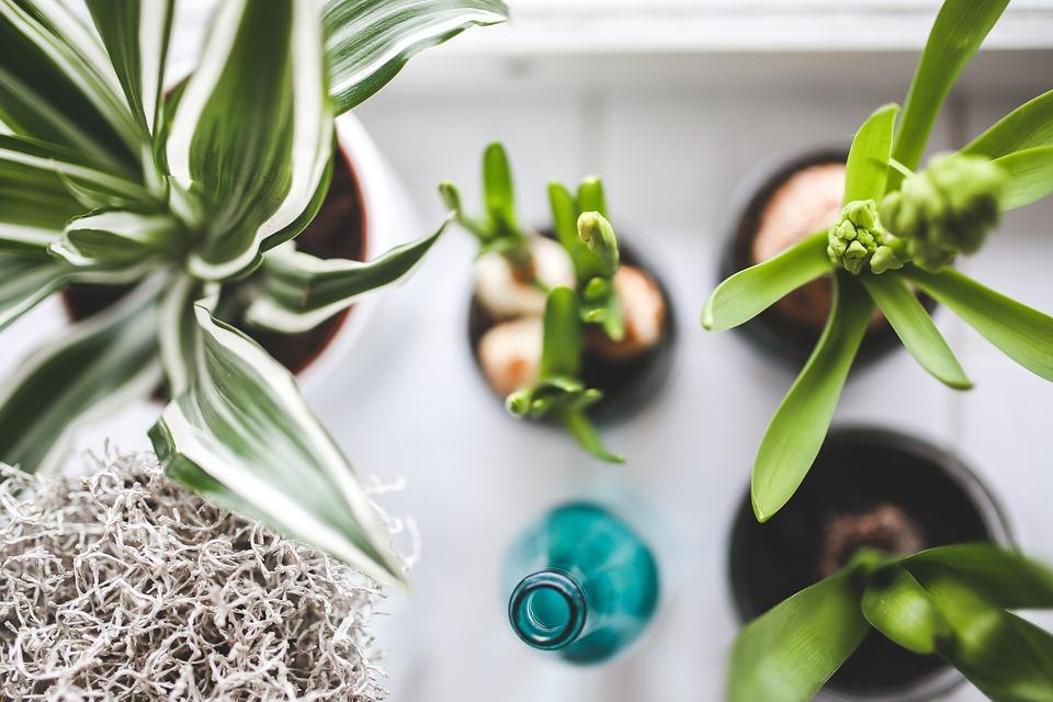 houseplants 1
