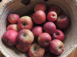 apple_basket